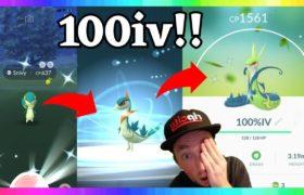 100iv SHINY SNIVY CAUGHT + SHINY SERPERIOR EVOLUTION IN POKEMON GO! ( 6th & 7th Shiny Snivy )