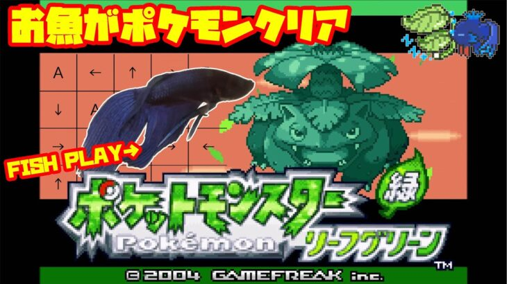 【1553h~_セキチクジム編】ペットの魚がポケモンクリア_Fish Play Pokemon【作業用BGM】
