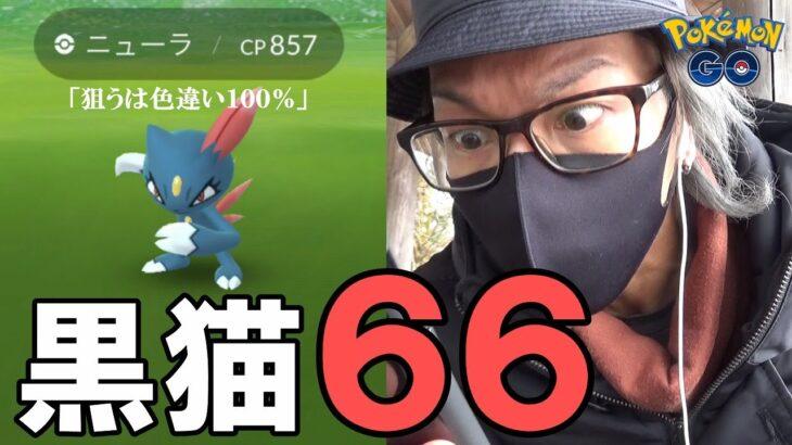 【ポケモンGO】衝撃まで◯匹!?色違えニューラ100%66連!ニューラのリサーチデイでアホになる男!【黒猫ラッシュ】