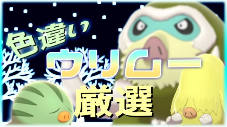 【ポケモン剣盾】寒いしコンペ入りウリムー色違い厳選※気まぐれで配布あり【概要必読】