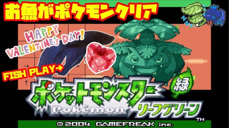 【2159h~_トキワジム編】ペットの魚がポケモンクリア_Fish Play Pokemon【作業用BGM】