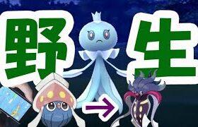 【ポケモンGO】野生のプルリル湧き!特殊進化ポケモンも実装?【レジェンドシーズン最新情報】
