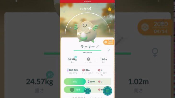 【ポケモンGO】 No.113 ラッキー(色違い)を進化させてみた!/Pokémon GO No.113 Chansey (shiny) Evolving challenge #shorts