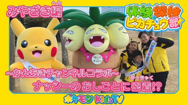 【ポケモン公式】体験探検ピカチュウ部!「みやざき編」-ポケモン Kids TV
