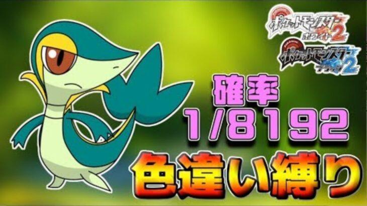 【LIVE】ポケモン中級者のBW2色違いの旅ツタージャ4560~【BW2】