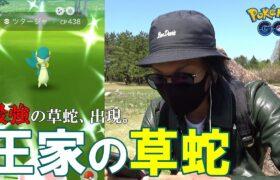 【ポケモンGO】くさへびポケモンを解明せよ!ツタージャのコミュニティデイ!最強の草蛇を探し出し、さらに最強の草技「ハードプラント」を習得させよ!【すな3倍】