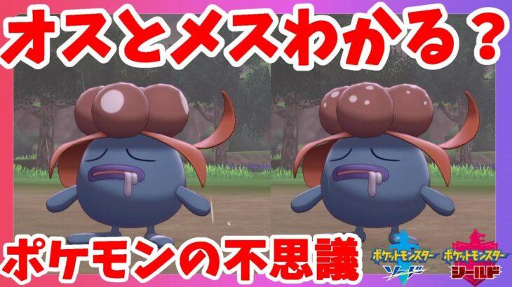 【ポケモンソードシールド】ポケモンの不思議!オスとメスで姿が違うポケモンを探せ!