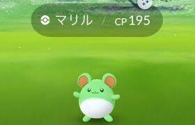 ポケモンGO  マリル色違い