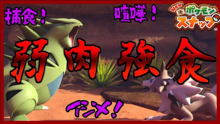 【Newポケモンスナップ】ポケモン界の弱肉強食がエグい…! ケンカ 捕食 いじめ etc…
