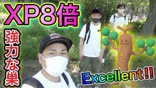 XP8倍のウソッキーの巣!大阪城公園が激アツだった!【ポケモンGO】