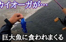 【ポケモンルアー】多分日本一カイオーガが食べられました。