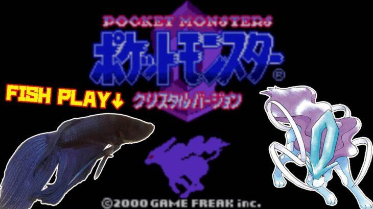 【ワカバタウン編│204h~】ペットの魚がポケモンクリア_Fish Play Pokemon【作業用BGM】