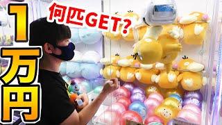 1万円で何匹GET?ポケモンUFOキャッチャー!ぬいぐるみ縛りクレーンゲーム