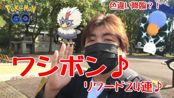 【ポケモンGO】ワシボンリワード24連♪色違い降臨?!